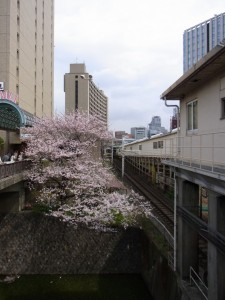 飯田橋駅より 桜と総武線